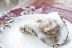 Fresh raw oyster. Fresh raw oyster on a white plate Royalty Free Stock Photography
