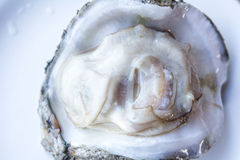 Fresh raw oyster. Fresh raw oyster on a white plate Stock Photo