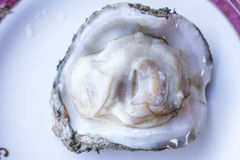 Fresh raw oyster. Fresh raw oyster on a white plate Stock Photography