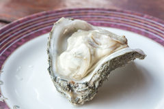 Fresh raw oyster. Fresh raw oyster on a white plate Stock Images