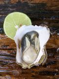 Fresh raw oysters Royalty Free Stock Photography