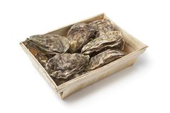 Fresh raw oysters in a box Stock Photography