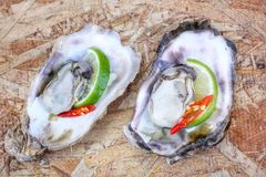 Fresh raw oysters. Chilli and lemon Stock Image