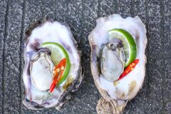 Fresh raw oysters. Chilli and lemon Royalty Free Stock Image