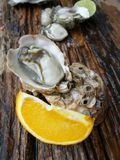 Fresh raw oysters Royalty Free Stock Photo