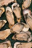 Fresh raw oysters at a fish market. Top view Royalty Free Stock Photos