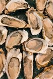 Fresh raw oysters at a fish market. Top view Stock Images