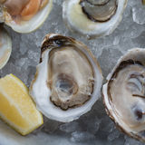 Fresh raw oysters on ice Royalty Free Stock Photos