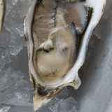 Fresh raw oysters on ice. With lemon Royalty Free Stock Images