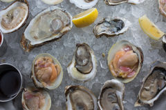 Fresh raw oysters on ice. With lemon Stock Photo