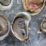 Fresh raw oysters on ice. With lemon Royalty Free Stock Photos