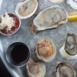 Fresh raw oysters on ice Royalty Free Stock Photo