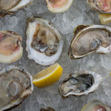 Fresh raw oysters on ice Stock Photos