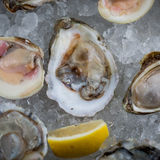 Fresh raw oysters on ice Royalty Free Stock Images