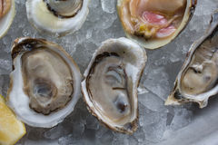 Fresh raw oysters on ice. With lemon Royalty Free Stock Photography