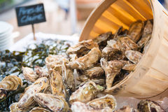 Fresh raw oysters with ice. In restaurant Royalty Free Stock Images