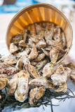 Fresh raw oysters with ice. In restaurant Royalty Free Stock Photo