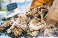 Fresh raw oysters with ice. In restaurant Stock Image