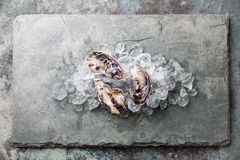 Fresh raw oysters with ice. Fresh raw oysters on stone background with ice Royalty Free Stock Photography