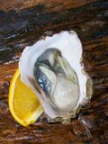 Fresh raw oysters Royalty Free Stock Photos
