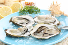 Fresh raw oysters with lemon juice Stock Images