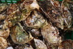 Fresh raw oysters in market. Fresh raw oysters on display in outdoor market for sale in Nice, France Stock Photos