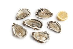 Fresh raw oysters in an open shell. On white background Stock Photos
