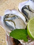 Fresh raw oysters Royalty Free Stock Image