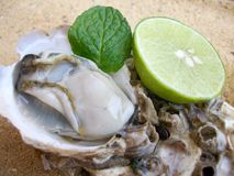 Fresh raw oysters Stock Photos
