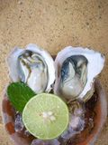 Fresh raw oysters. Pepper mint leaves and lemon Royalty Free Stock Photo