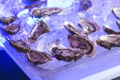 Fresh raw oysters on a plated. With blue ice Royalty Free Stock Photos
