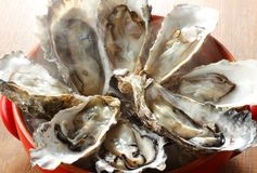 Fresh raw oysters seafood on wooden board Stock Images