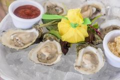 Fresh Raw Oysters Served on ice in Half Shells. In a Restaurant Royalty Free Stock Images