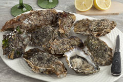 Fresh raw pacific oysters. On a plate Stock Photo