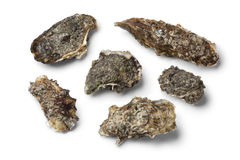Fresh raw pacific oysters Stock Photos