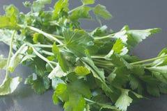 Fresh raw parsley. Fresh raw on parsley leaves table Royalty Free Stock Photo