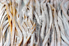 Fresh raw pasta Stock Images