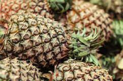 Fresh raw pineapples on market stall in Malaysia Royalty Free Stock Photos