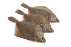 Fresh raw plaice fishes. On white background Stock Images