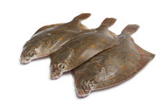 Fresh raw plaice fishes. On white background Stock Photography