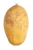 Fresh raw potato. Close - up small new and fresh raw potato Stock Image