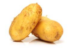 Fresh Raw Potato. On white background Royalty Free Stock Photography