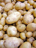 Fresh raw Potatoes. Bunch of freshly caught raw new potatoes Stock Images