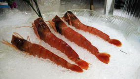 Fresh Raw Prawn Royalty Free Stock Photography