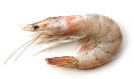Fresh raw prawn. Isolated on white background Stock Photo