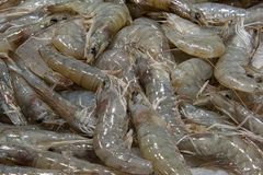 fresh raw prawn royalty free stock image