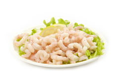Fresh raw prawns Stock Photography
