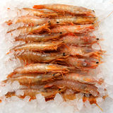 Fresh raw prawns Royalty Free Stock Photography