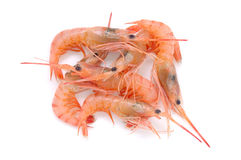 Fresh raw prawns Royalty Free Stock Photos