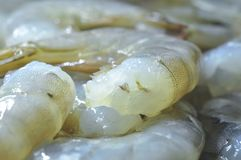 Fresh raw prawns. Fresh raw shrimps. Abstract food background. Closeup shot Stock Photography